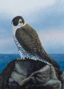 painting of peregrine on the rocky shoreline